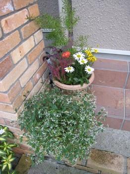 2010秋の寄せ植え3.jpg