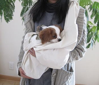2月13日初めての抱っこお散歩.jpg